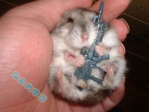 Ngẫu .. ngẫu có vũ khí... Ngươi ... ngươi không được khi dễ ngẫu =))